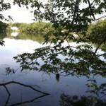 Little Pond on Belmont Uplands